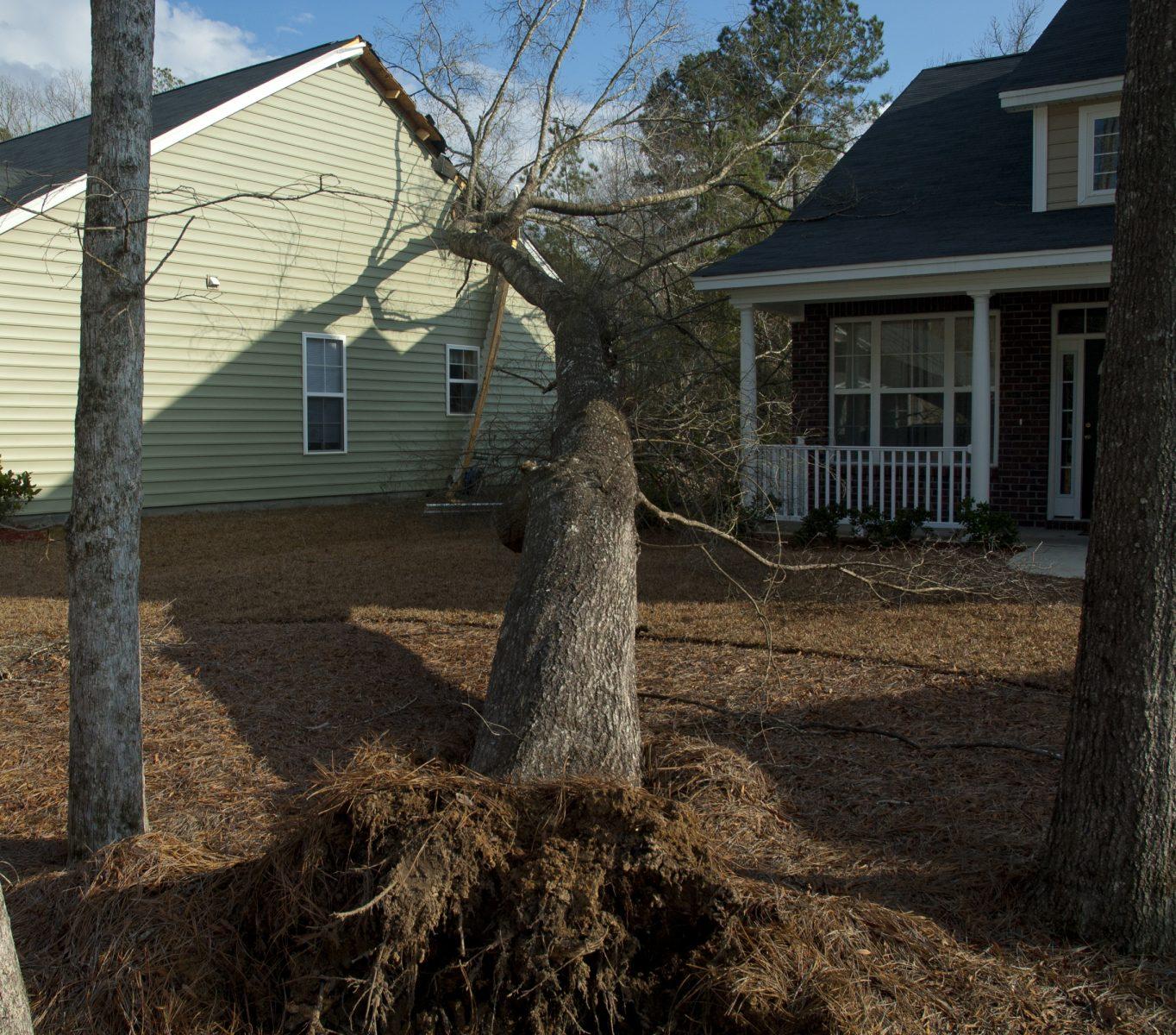 1-Hazard tree assesment